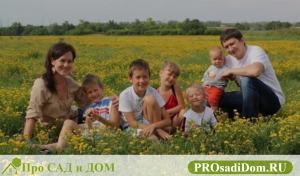 Как многодетной семье получить земельный участок