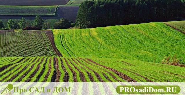Подготовка договора аренды земельного участка сельскохозяйственного назначения в 2019 году