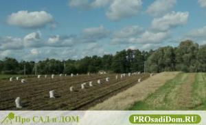 Кадастровые статусы земельных участков: СНТ, ДНТ, ИЖС