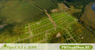 Статус земельного участка: как узнать