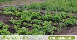 Как определить состав и качество почвы на участке