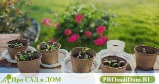 Перец – теплолюбивое растение, поэтому высадка перцев в грунт производится в определенные сроки, после того, как почва прогреется до 15 градусов. Нельзя назвать единые сроки высадки перца, они разнятся для разных регионов. Обычно это происходит в мае – июне. К этому времени возраст рассады составляет 2 месяца, она имеет по 7–9 хорошо развитых листа, несколько цветков. Раннеспелые сорта могут иметь завязь. [mwm-aal-display] Подготовка участка Желательно с осени определить, какие грядки выделите для перца. Они должны прогреваться солнцем, быть защищенными от ветра. Правильные предшественники – лук, бобовые, тыквенные. Лучший грунт для перца – рыхлая суглинистая или супесчаная почва с большим количеством гумуса, обогащенная питательными веществами, без избытка азота. Подготовка почвы и прочие секреты хорошего урожая заключаются в первоначальном анализе земли с грядки. Анализ почвы позволит добиться нужной кислотности, для перца она должна составлять PH 6–6,6. Если показатель ниже 6, добавьте известковые материалы – мел, гашеную известь. Удобрения вносят в почву осенью или за несколько недель до высадки рассады. Из органических удобрений используют перегной, компост, птичий помет. Опытные огородники смешивают органические и минеральные удобрения. Пересадка рассады в теплицу Высадка перцев в открытый грунт и в теплицу, имеет существенное отличие. Позаботьтесь о создании оптимального климата: Использование нетканого материала, для защиты перцев, снижает риск их заболеваний и гибели. Этот материал, натянутый внутри теплицы, защищает урожай от солнечных ожогов и конденсата. Удобно сделать переносные конструкции, которые впоследствии можно использовать для защиты грядок от холода и солнечных лучей. Обогреватель с терморегулятором обеспечит постоянную температуру (16–18 градусов). Автоматическая форточка позволит проветривать теплицу в жаркую погоду. Перед высадкой рассады прогрейте теплицу, измерьте температуру почвы, она должна быть не ниже 15 градусов. Плотность посадки за