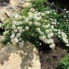 ТОП-7 моих самых любимых беспроблемных растений в саду