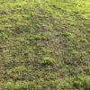 Выпрел газон