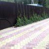 Озеленяем забор из профнастила по всему периметру. Наш опыт.