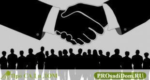 Наследование недвижимости: по закону, по завещанию и без него