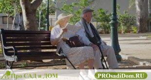 Кому положена страховая пенсия по старости